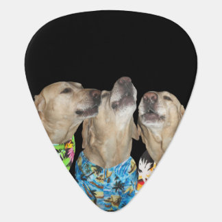 Singing Yellow Labs Custom Guitar Pick