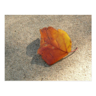 Single Autumn Leaf Postcard