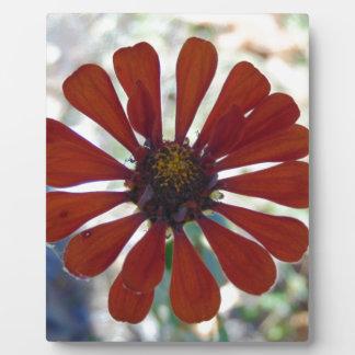 Single Bloom Photo Plaques