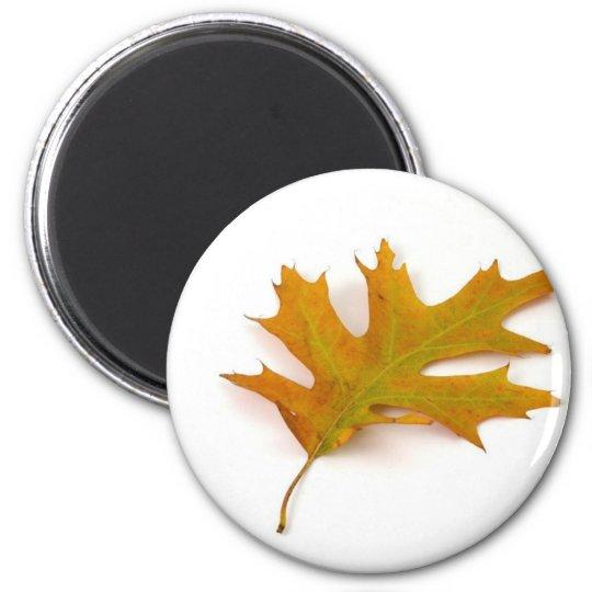 Single Coloured Northern Red Oak Leaf On White Bac Magnet