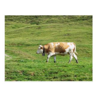 Single cow in an alpine pasture postcard