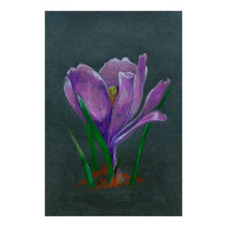 Single flower crocus sketch chalk illustration poster
