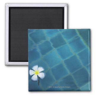 single frangipani flower floating in water magnet