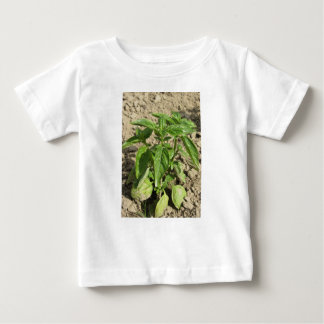 Single fresh basil plant growing in the field baby T-Shirt