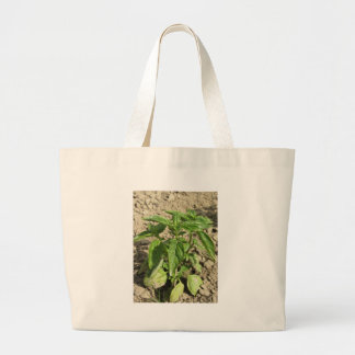 Single fresh basil plant growing in the field large tote bag