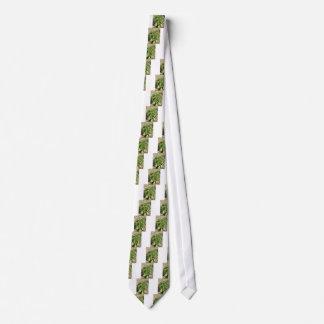 Single fresh basil plant growing in the field tie