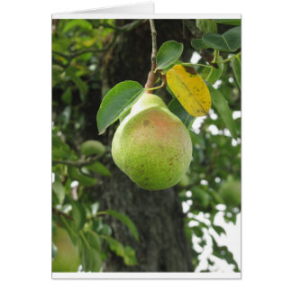 Single green pear hanging on the tree card