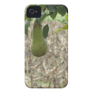 Single green pear hanging on the tree iPhone 4 cover
