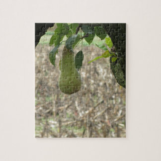 Single green pear hanging on the tree jigsaw puzzle