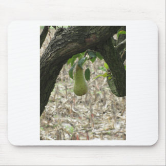 Single green pear hanging on the tree mouse pad