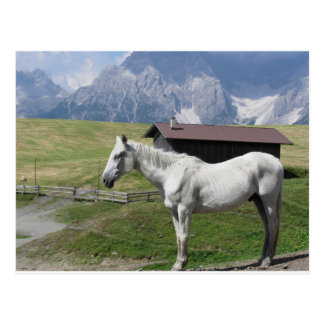 Single horse in an alpine pasture postcard