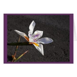 Single Iris Greeting Card
