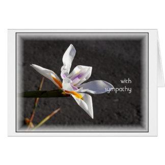 Single Iris Greeting Cards