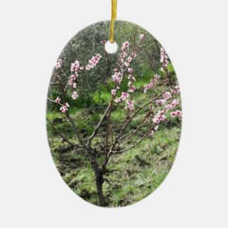 Single peach tree in blossom. Tuscany, Italy Ceramic Ornament
