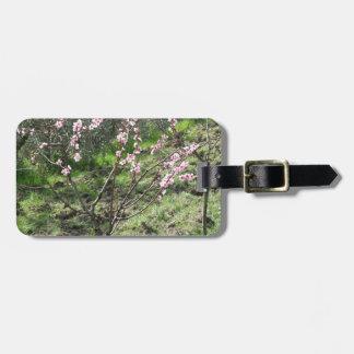 Single peach tree in blossom. Tuscany, Italy Luggage Tag
