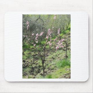 Single peach tree in blossom. Tuscany, Italy Mouse Pad