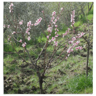 Single peach tree in blossom. Tuscany, Italy Napkin