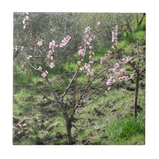 Single peach tree in blossom. Tuscany, Italy Tile