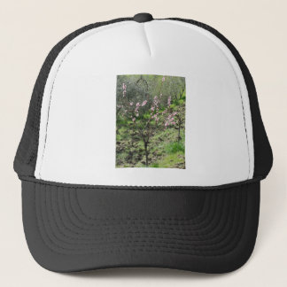 Single peach tree in blossom. Tuscany, Italy Trucker Hat
