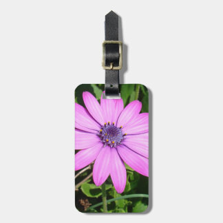 Single Pink African Daisy Against Green Foliage Luggage Tag