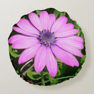 Single Pink African Daisy Against Green Foliage Round Cushion
