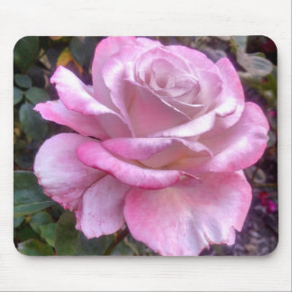 Single pink and white rose mouse pad