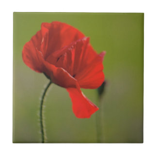 Single Poppy Tile