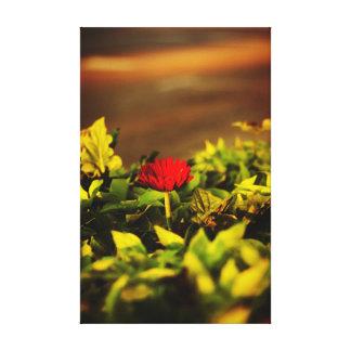 Single red flower Niles Michigan Canvas Print