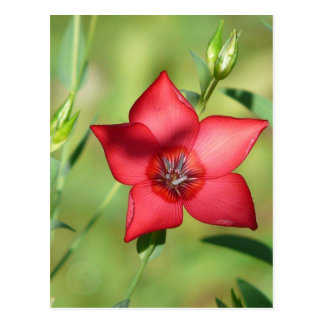 Single Red Flower on Green Postcard