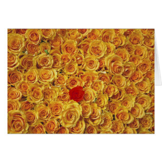 Single Red in Yellow Bed Roses Note Card