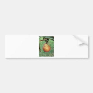 Single red pear hanging on the tree bumper sticker