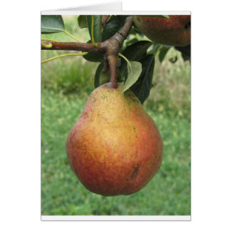 Single red pear hanging on the tree card