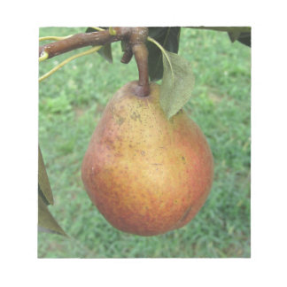 Single red pear hanging on the tree notepad