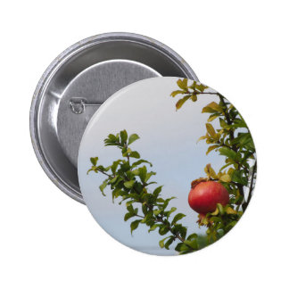 Single red pomegranate fruit on the tree in leaves 6 cm round badge