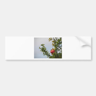 Single red pomegranate fruit on the tree in leaves bumper sticker
