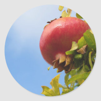 Single red pomegranate fruit on the tree in leaves classic round sticker