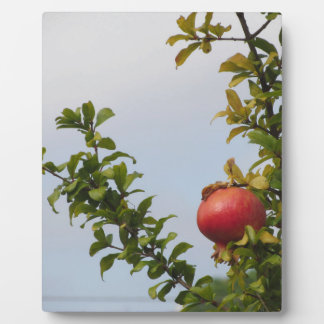 Single red pomegranate fruit on the tree in leaves plaque