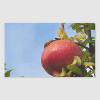 Single red pomegranate fruit on the tree in leaves rectangular sticker