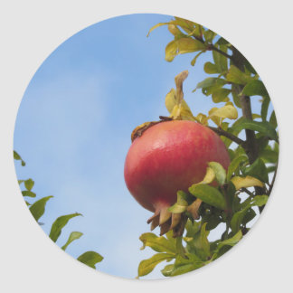 Single red pomegranate fruit on the tree in leaves round sticker