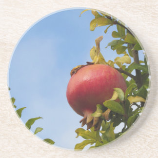 Single red pomegranate fruit on the tree in leaves sandstone coaster