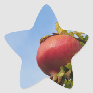 Single red pomegranate fruit on the tree in leaves star sticker