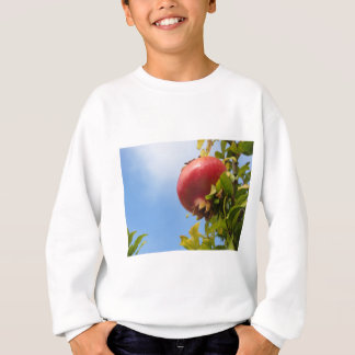 Single red pomegranate fruit on the tree in leaves sweatshirt