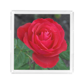 Single red rose acrylic tray