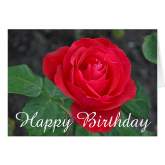 Single red rose birthday card