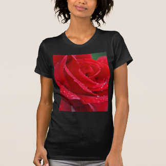 Single red rose blossoms t shirts