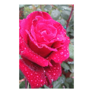 Single red rose flower with water droplets custom stationery