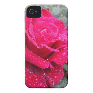 Single red rose flower with water droplets iPhone 4 cover