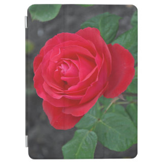 Single red rose iPad air cover