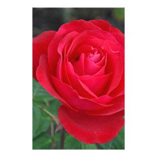 Single red rose stationery