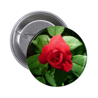 Single Red Rose with Morning Dew Drops Button